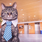 How to be good in Convincing Traditional Clients